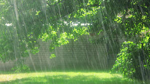 http://img275.imagevenue.com/loc599/th_954799616_rain_on_a_sunny_day_122_599lo.jpg